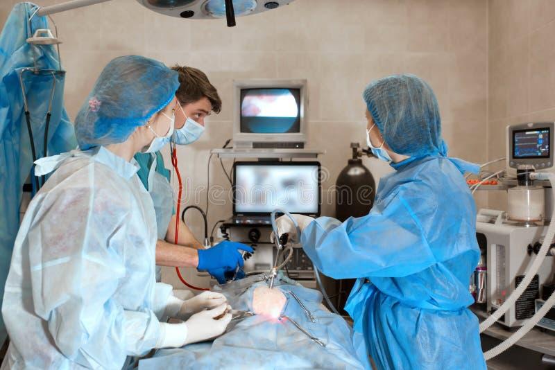 Dierenarts of artsen die chirurgie in de kliniek doen geneeskunde, huisdier, dieren, gezondheidszorg en mensenconcept royalty-vrije stock foto's