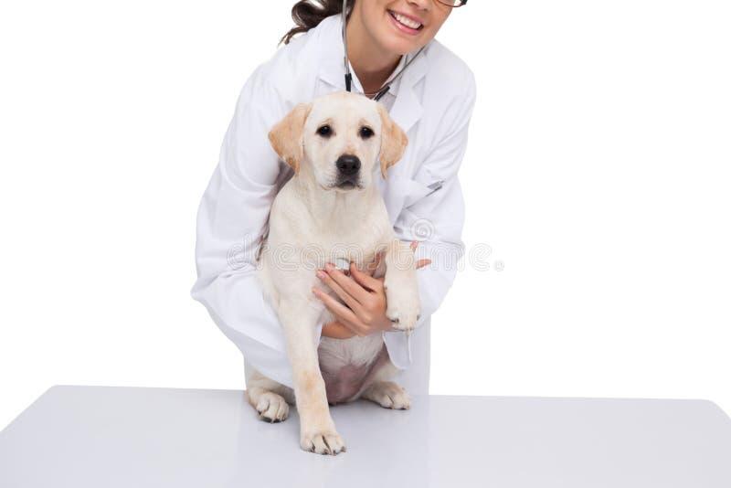 Dierenarts die controle doen omhoog bij een hond royalty-vrije stock foto's