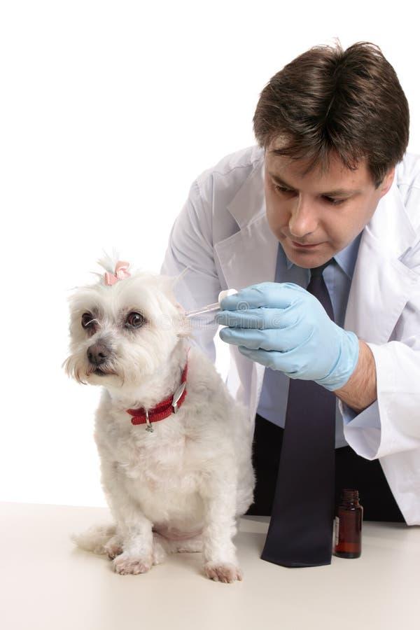 Dierenarts die een huisdierenhond behandelt royalty-vrije stock afbeeldingen
