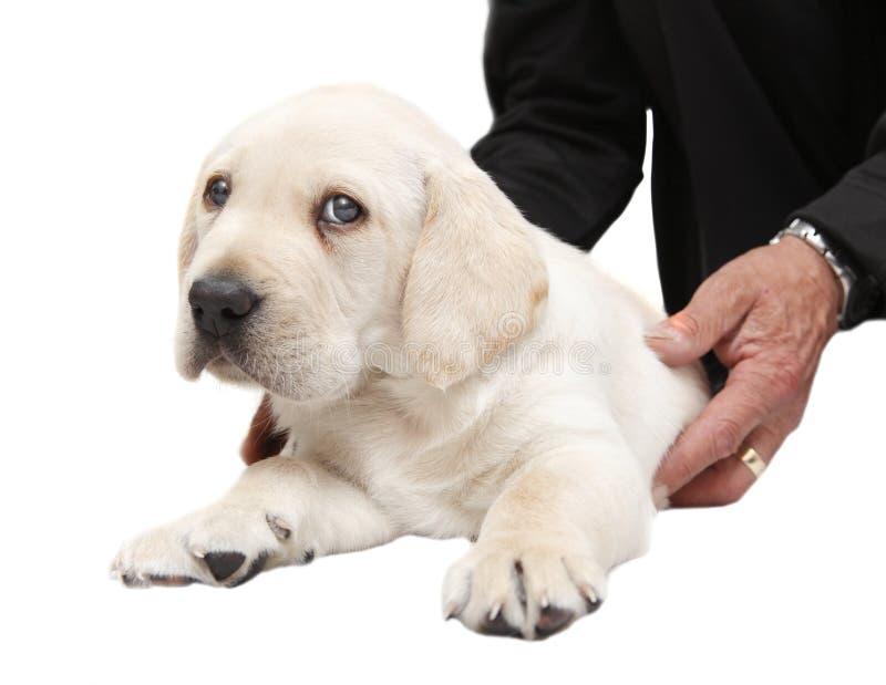 Dierenarts die een puppyhond onderzoeken stock afbeelding