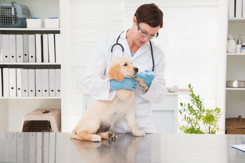 Dierenarts die geneeskunde geven aan hond royalty-vrije stock afbeeldingen