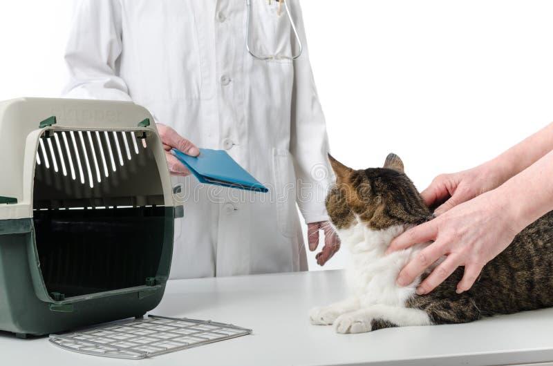 Dierenarts die het verslag van de kattengezondheid geven stock fotografie