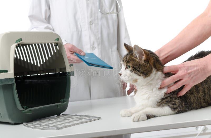 Dierenarts die het verslag van de kattengezondheid geven royalty-vrije stock fotografie