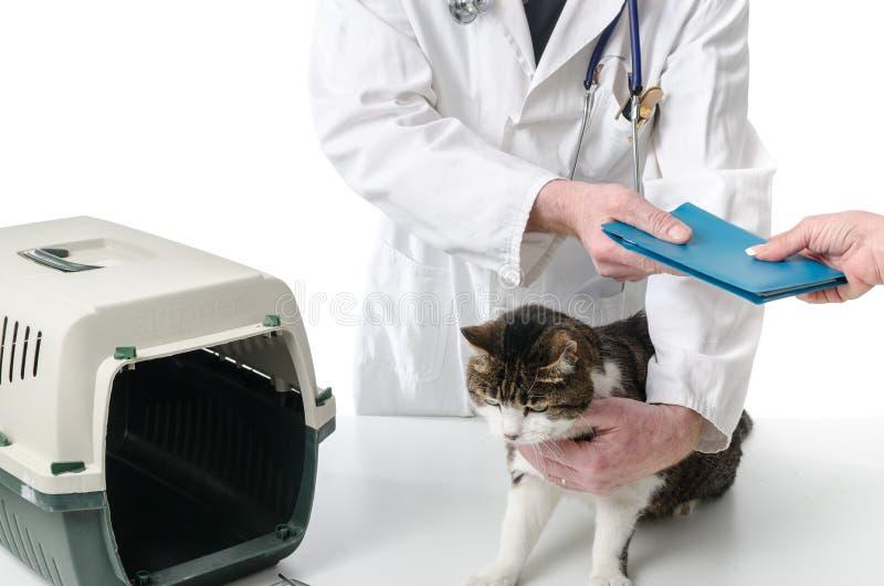 Dierenarts die het verslag van de kattengezondheid geven royalty-vrije stock afbeelding
