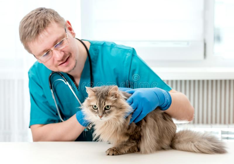 Dierenarts die regelmatige controle van een kat uitschrijven op veterinair kantoor stock afbeeldingen