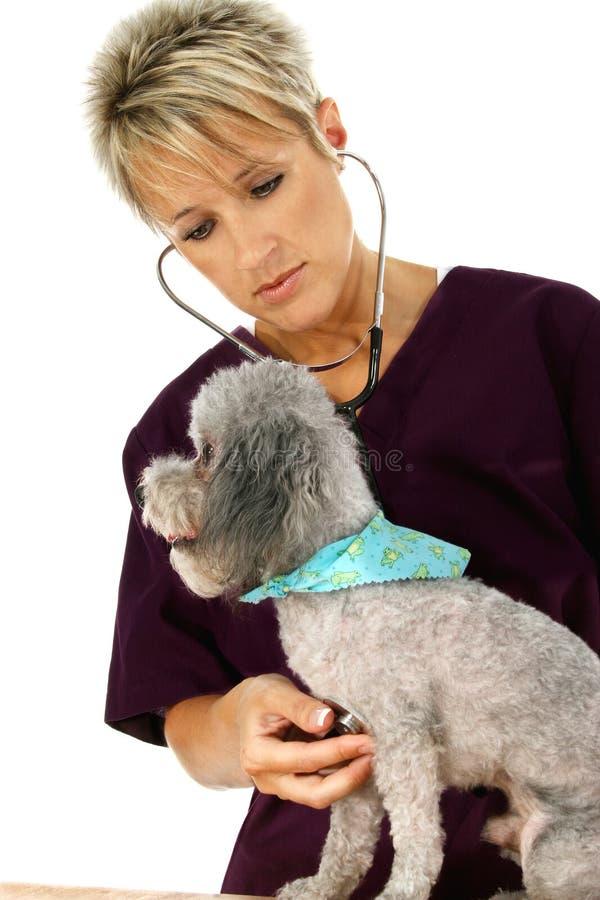 Dierenarts en Hond stock foto's