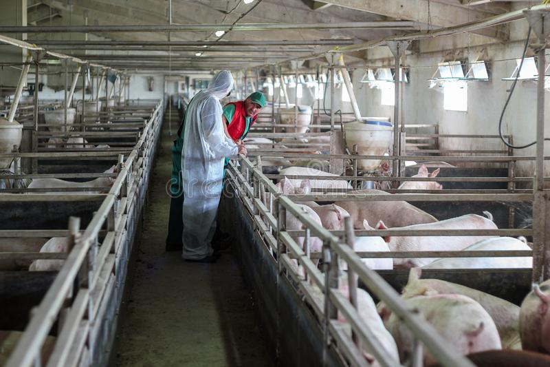 Dierenarts en Landbouwer Working Together royalty-vrije stock afbeelding