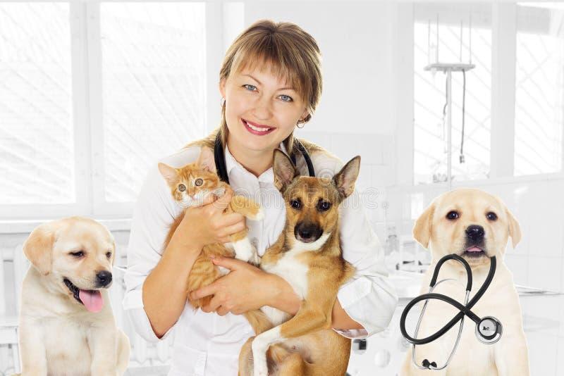 Dierenarts en puppy en katje in kliniek stock afbeelding