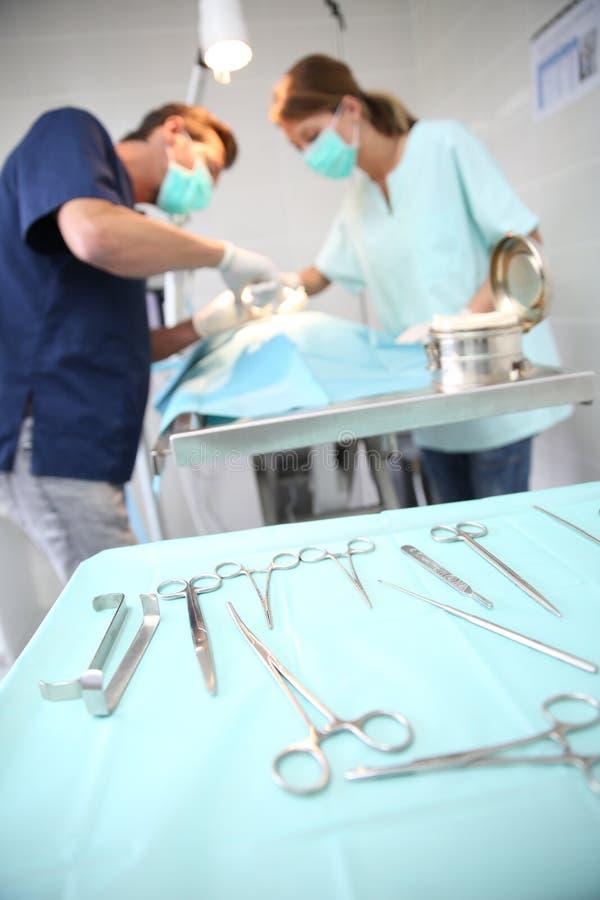 Dierenartsen in chirurgieruimte het werken stock foto