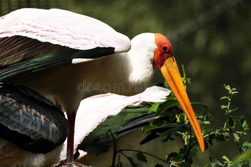 dierentuin royalty-vrije stock foto's