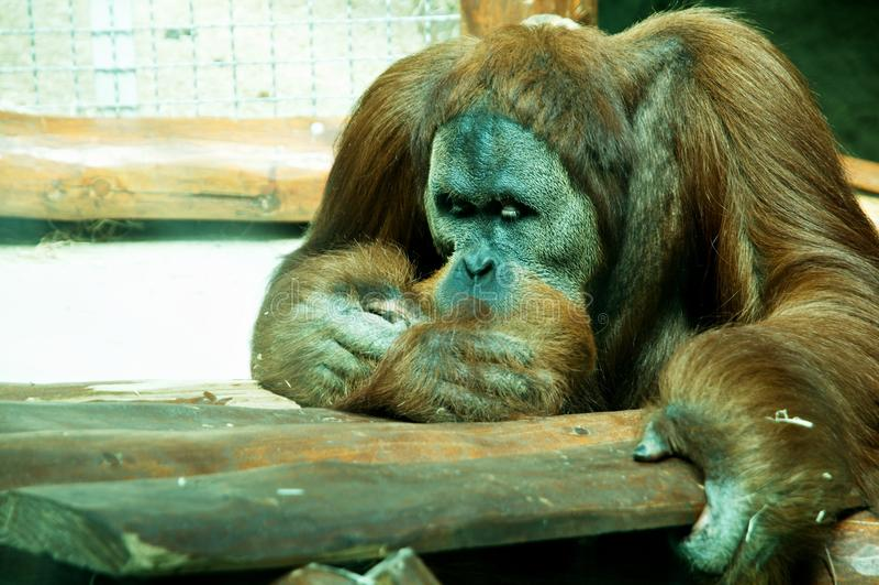 dierentuin stock foto's