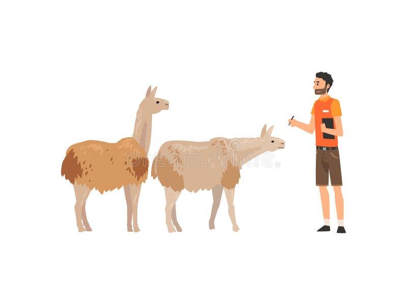 Dierentuinarbeider of Veterinair Examining Alpacas, Professionele Zookeeper Character Caring van Dieren Vectorillustratie royalty-vrije illustratie