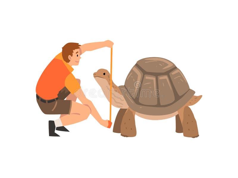 Dierentuinarbeider of Veterinair Examining en het Meten van Schildpad, Professionele Zookeeper Character Caring van Dierlijke Vec royalty-vrije illustratie