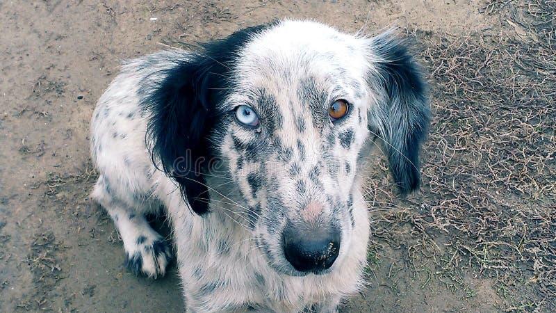 Dierentuindieren, honden stock foto's