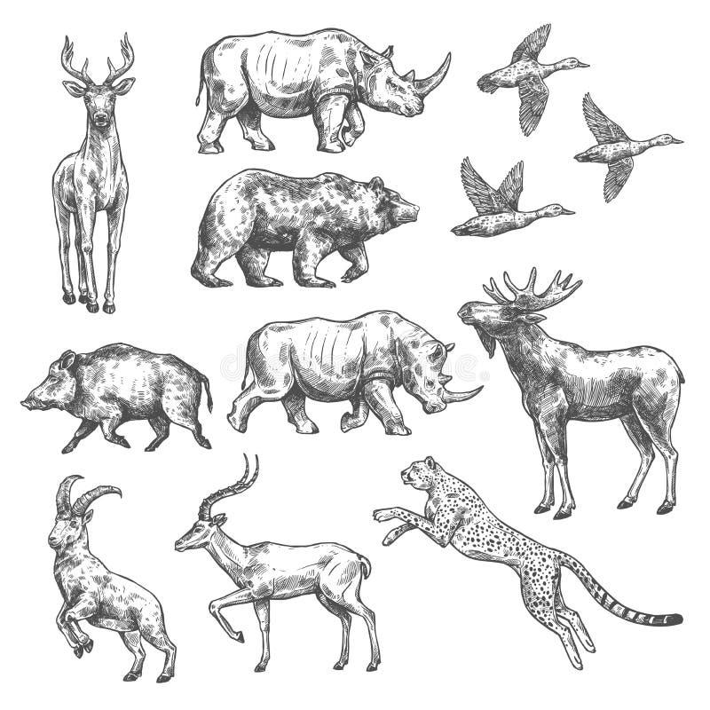 Dierlijk schetsontwerp van wild vogel en zoogdier vector illustratie