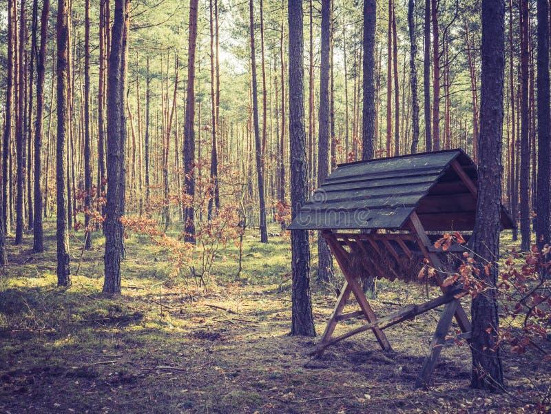 Dierlijk weiland in het bos royalty-vrije stock foto