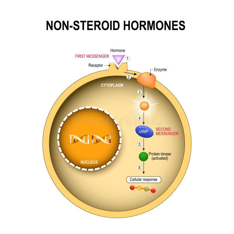 Dierlijke cel met kern, cytoplasma, DNA, enzime, eiwitkinase stock illustratie