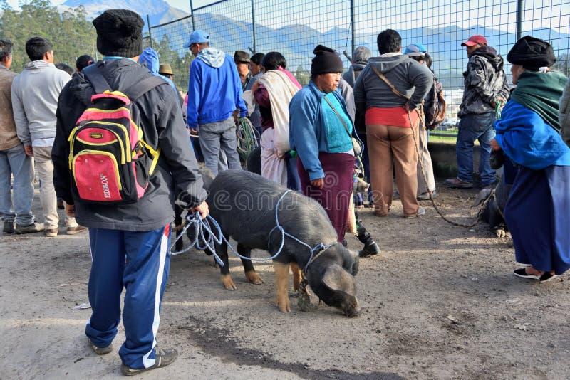 Dierlijke markt in Otavalo, Ecuador stock foto
