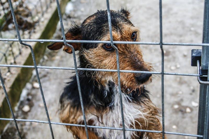 Dierlijke schuilplaats - Hoop - Droevige hond stock foto