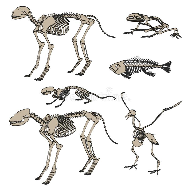 Dierlijke skeletten vector illustratie