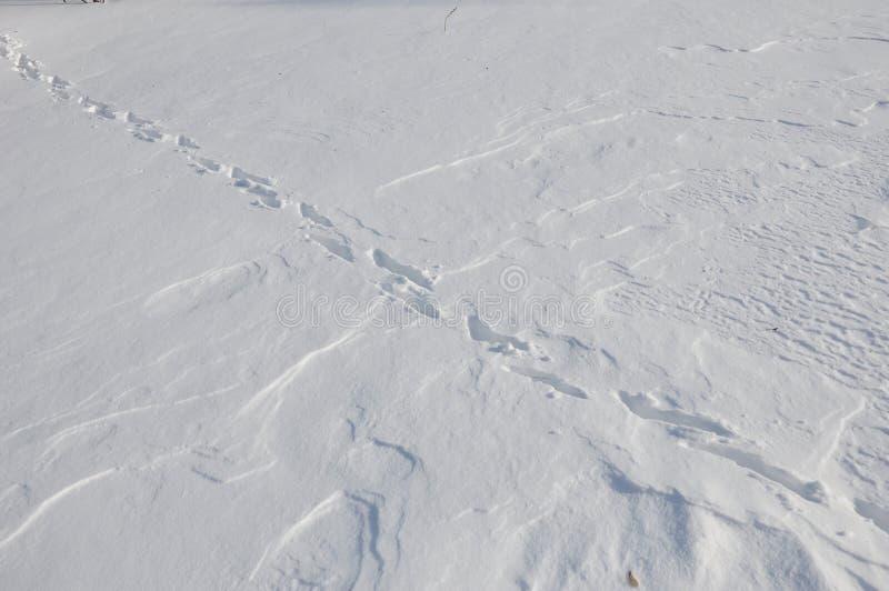 Dierlijke sporen op de sneeuw royalty-vrije stock afbeelding