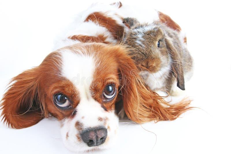 Dierlijke Vrienden Ware huisdierenvrienden Het konijntje van het hondkonijn snoeit samen dieren op geïsoleerde witte studioachter royalty-vrije stock afbeeldingen