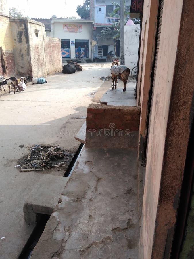 Dies ist eine Gali in Indien lizenzfreie stockfotografie