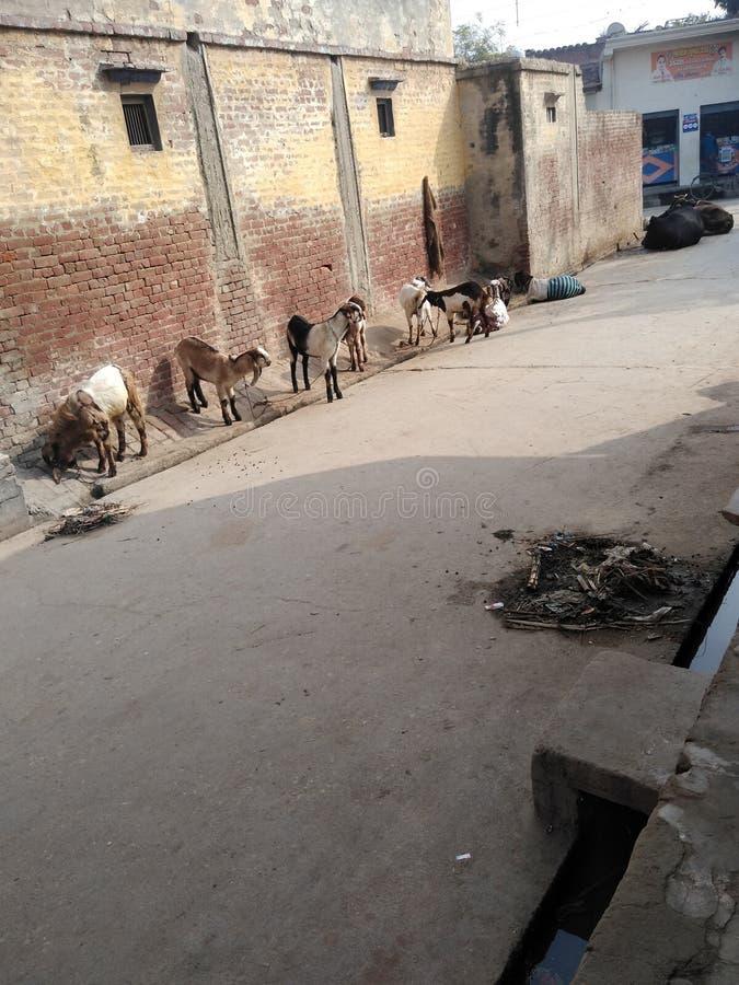 Dies ist eine Gali in Indien lizenzfreies stockbild