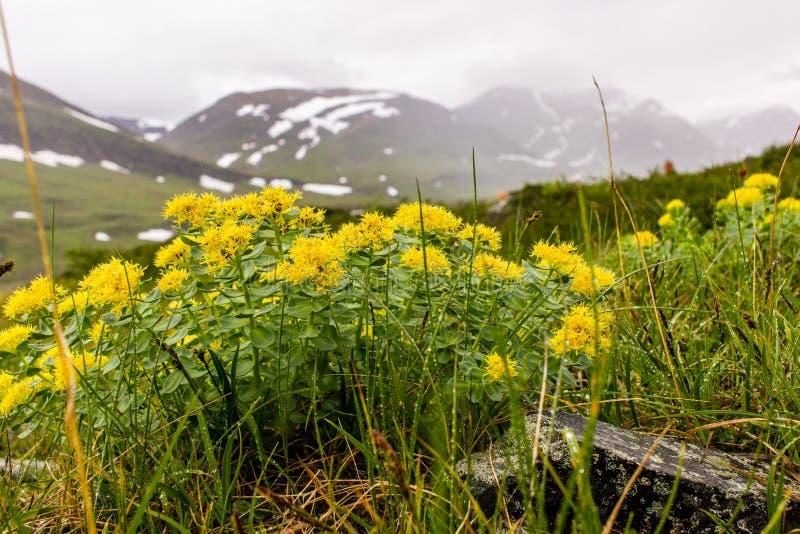Diese Blume hat starken medizinischen Effekt stockbilder