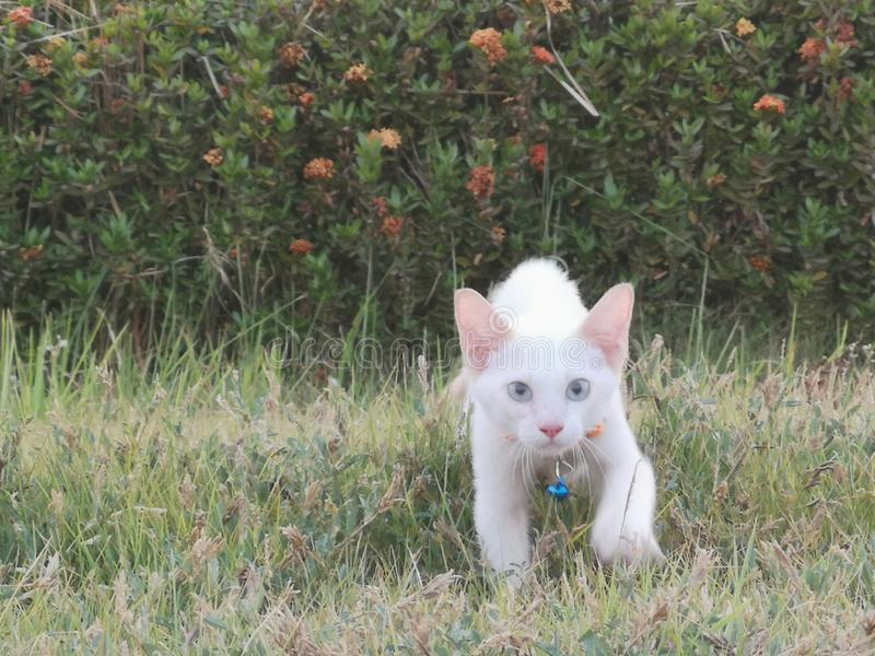 Diese Katze nameHeadphone2 stockbild