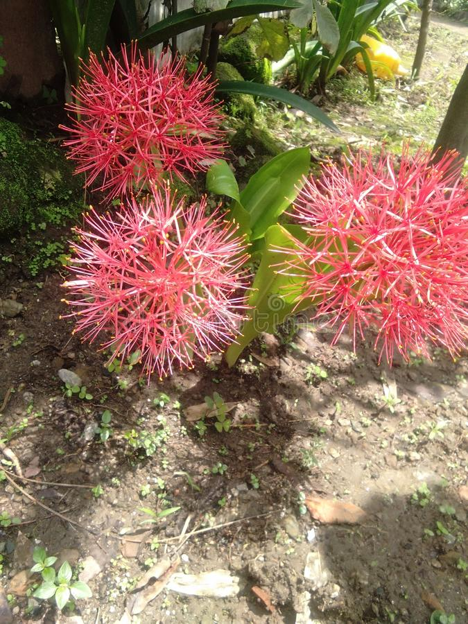Diese sind indische Blumen Ich liebe diese Blumen stockbilder