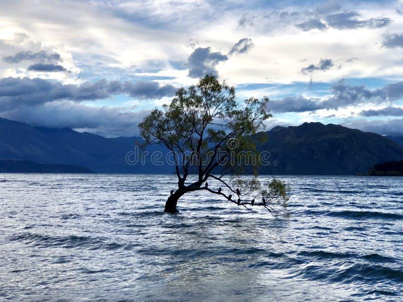 Dieser Wanaka-Baum stockbild