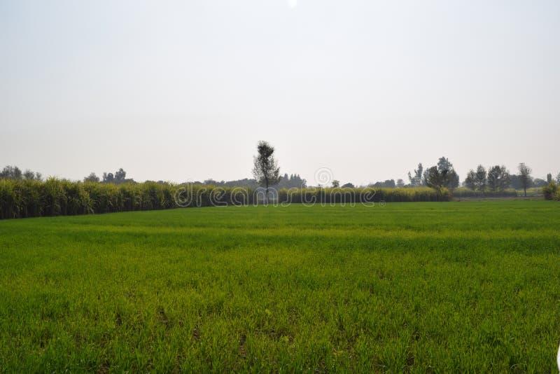 Dieses Bild des fruchtbaren Landes stockfotos