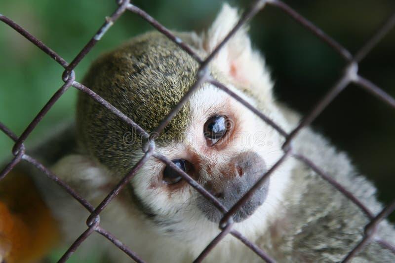 Dieses Haustier überwacht - searchi lizenzfreie stockfotos