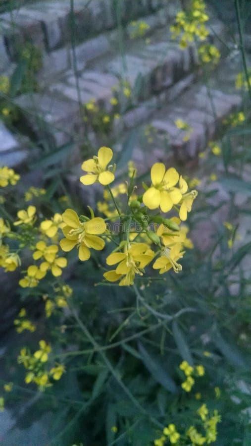 Dieses ist Bild der Blume lizenzfreie stockfotos