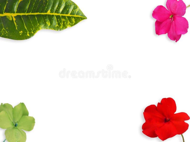 Dieses ist Blatt und Blume Colorfull auf Weiß lokalisiert lizenzfreie stockfotos
