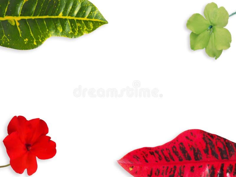 Dieses ist Blatt und Blume Colorfull auf Weiß lokalisiert stockfotografie