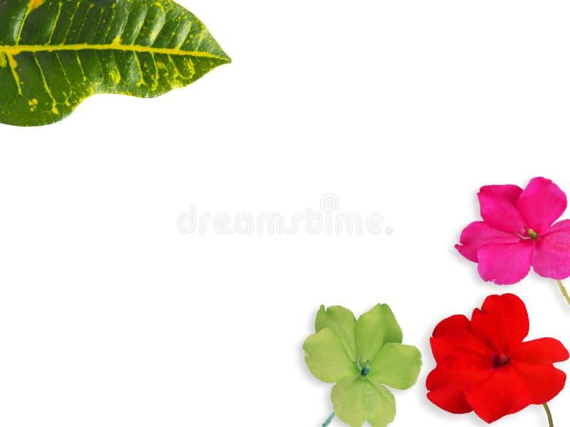 Dieses ist Blatt und Blume Colorfull auf Weiß lokalisiert lizenzfreie stockfotografie