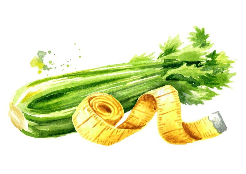 Dieta do conceito Alimento saudável com aipo e a fita de medição Ilustra??o tirada m?o da aquarela isolada no fundo branco ilustração royalty free