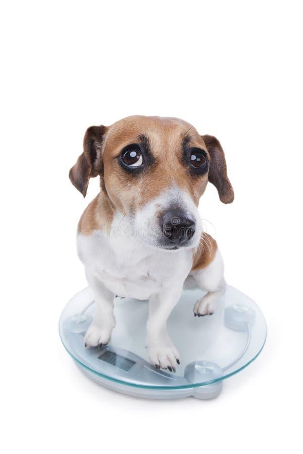 Dieta fracasada del animal doméstico foto de archivo