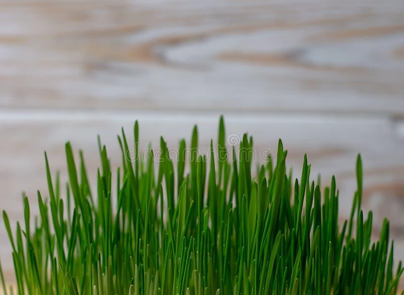 Dieta sana de trigo del germen de la dieta verde de la aptitud imagen de archivo libre de regalías
