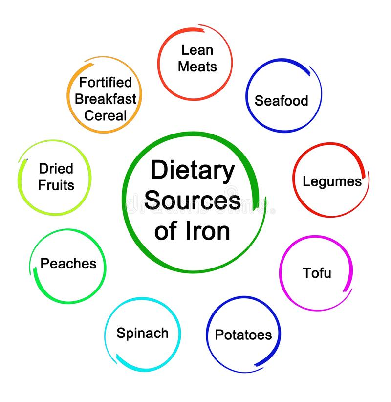 Dietary Sources of Iron. Important Dietary Sources of Iron royalty free illustration
