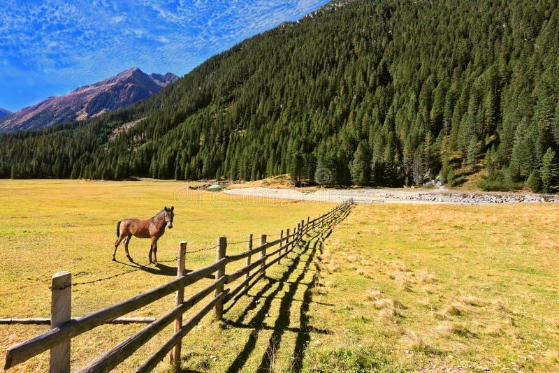 Dietro il recinto sta un cavallo rustico fotografie stock libere da diritti
