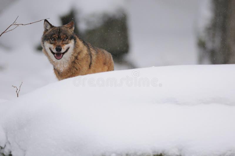 Dietro la collina della neve fotografia stock libera da diritti