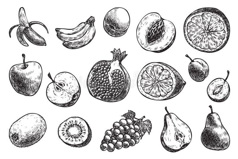 Diferentes frutos: banana, maçã, pera, ameixa, et? ilustração do vetor