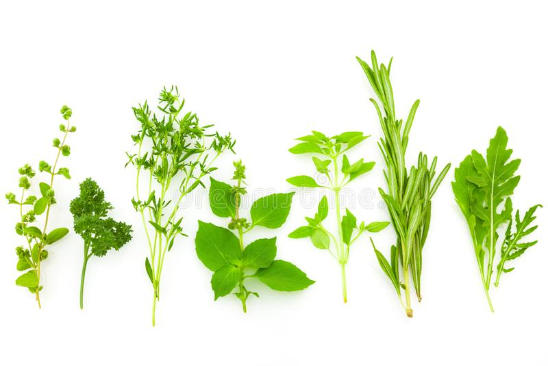 Diferentes hierbas de especias frescas aisladas en fondo blanco foto de archivo