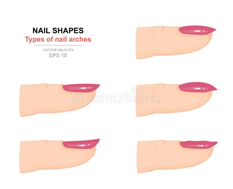Diferentes tipos de formas del clavo Tipos de arcos del clavo Ciencia del cuerpo humano Vista lateral Vector libre illustration