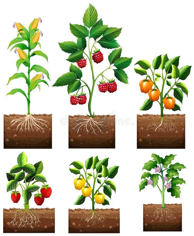Diferentes tipos de planta en jardín ilustración del vector
