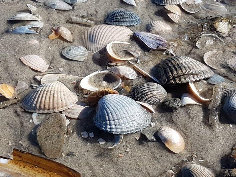 Différentes coquilles de mer dans le sable images libres de droits