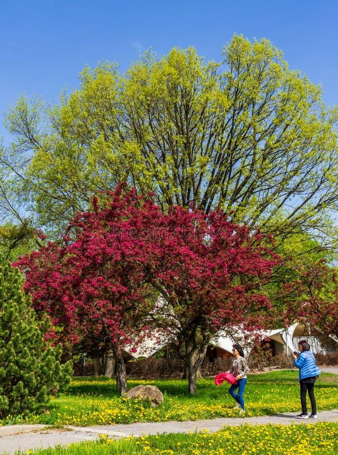 Différentes couleurs au jardin botanique de Montréal photos stock